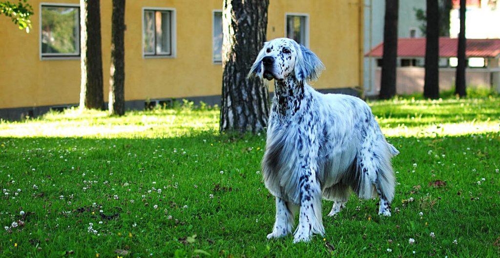 Koira puistikossa